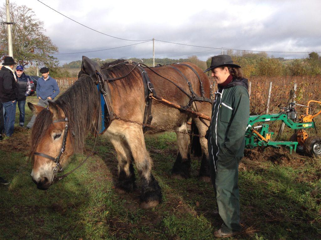 Le labour à cheval à La Clotte Cazalis